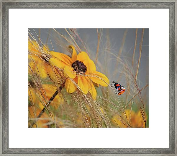 Colors Of Summer Framed Print by Anna Cseresnjes