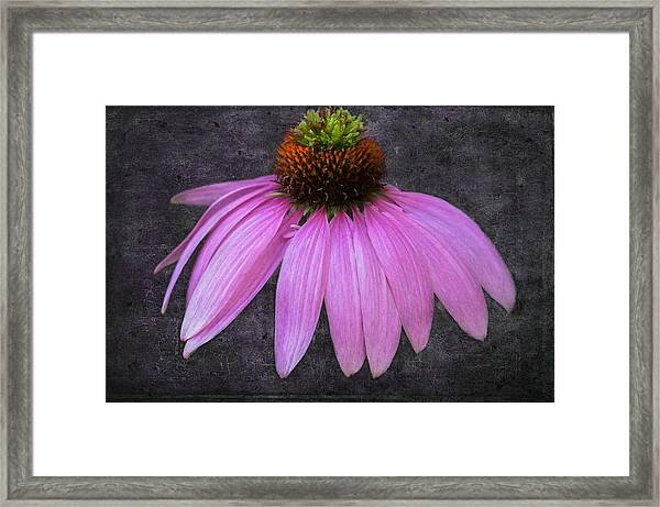 Framed Print featuring the photograph Cone Flower by Garvin Hunter