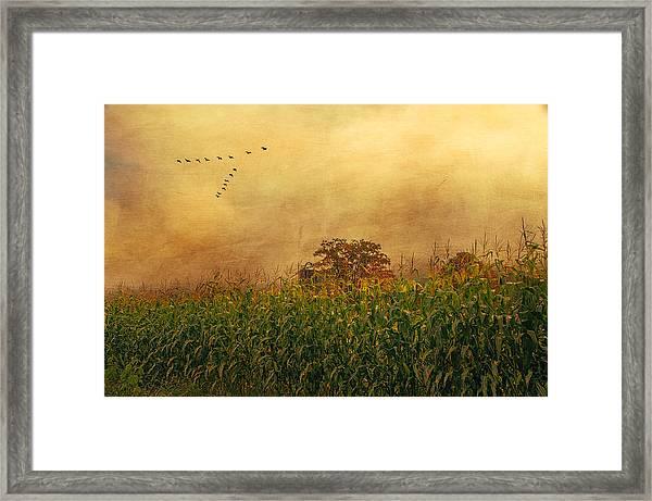 Cornfield And Fog Framed Print