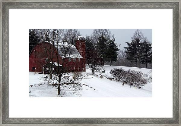Deer Feeding Below The Barn Framed Print by Willy  Nelson