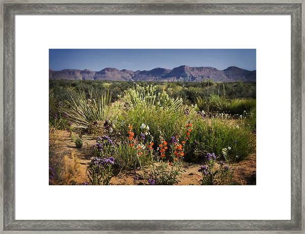 Desert Wildflowers Framed Print