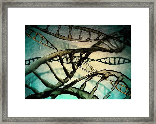 Dna Molecules Framed Print by Richard Kail