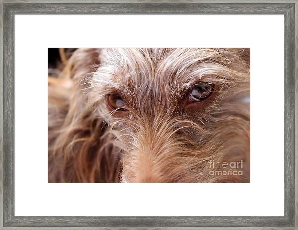 Dog Stare Framed Print