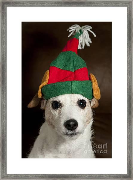 Dog Wearing Elf Ears, Christmas Portrait Framed Print