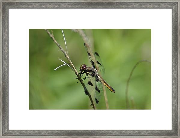 Framed Print featuring the photograph Dragon by David Armstrong