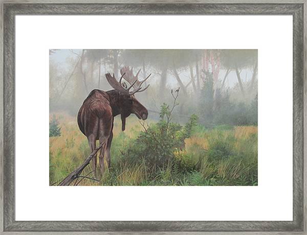 Early Morning Mist Framed Print