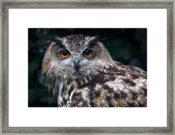 European Eagle Owl Framed Print