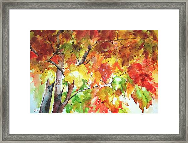 Fall Folliage  Framed Print