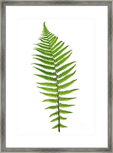 Fern Leaf Framed Print