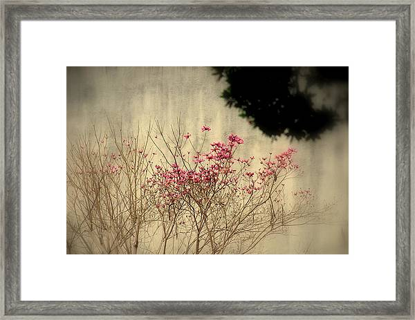 Filigree  IIi Framed Print