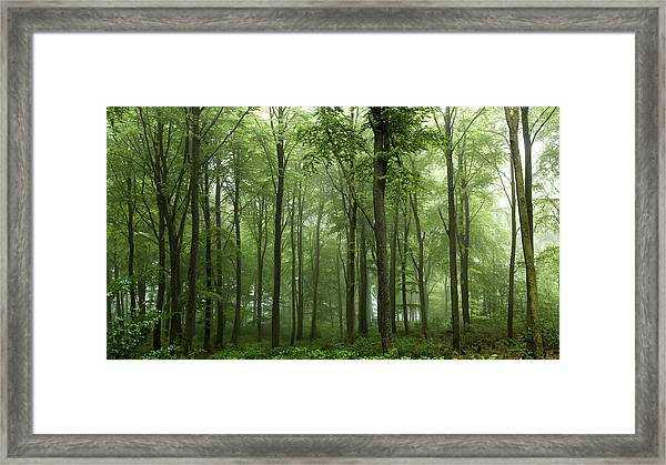 Forest... Framed Print