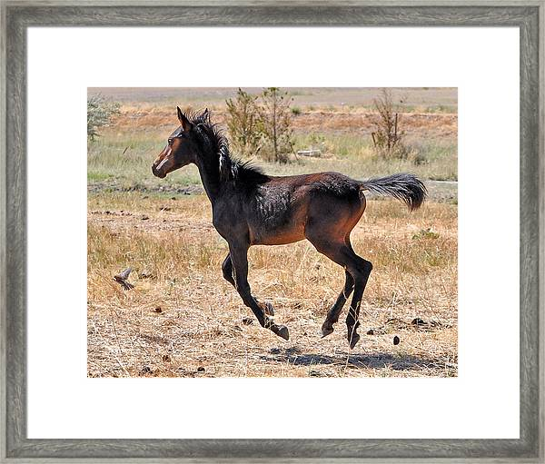 Free To Fly Framed Print