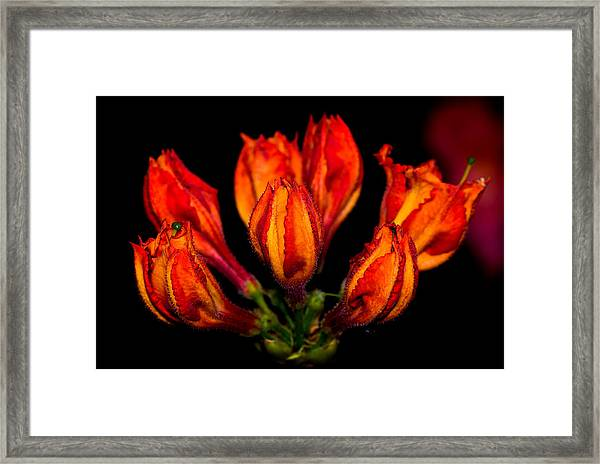 From The Blackness Framed Print