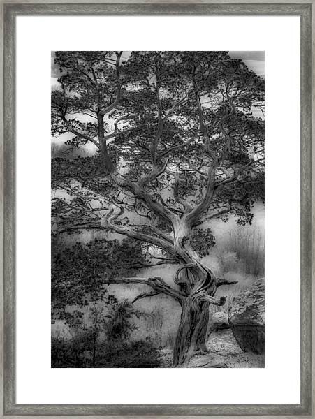Gibraltar Framed Print