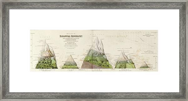 Global Botanical Geography Framed Print