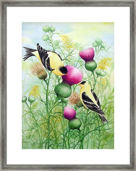 Gold Finches On Thistles Framed Print