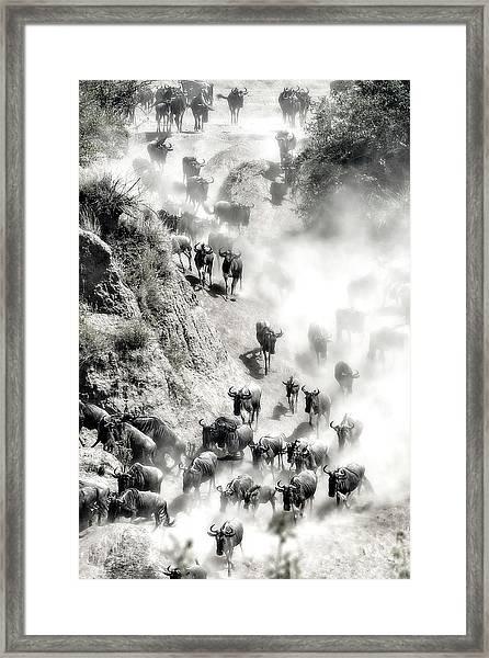 Great Migration Framed Print