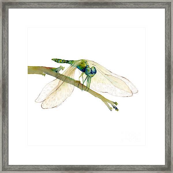 Green Dragonfly Framed Print