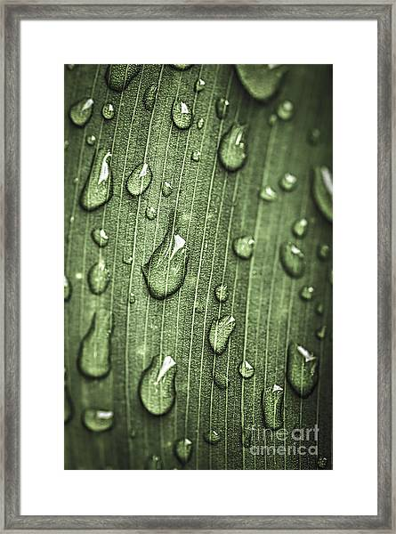 Green Leaf Abstract With Raindrops Framed Print