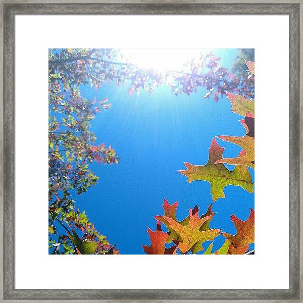 Hello Autumn Framed Print