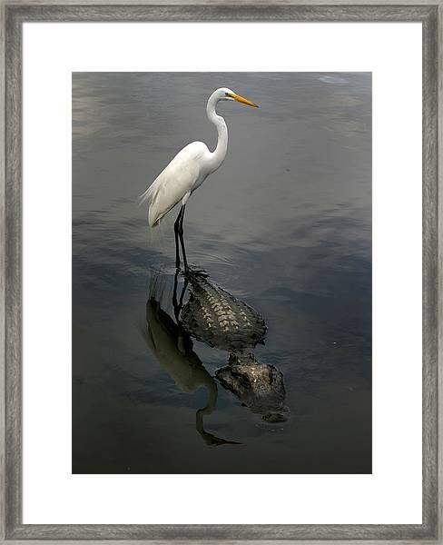 Hitch Hiker Framed Print