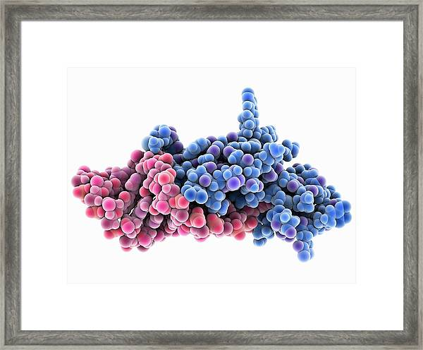 Hiv Nucleocapsid Protein Molecule Framed Print