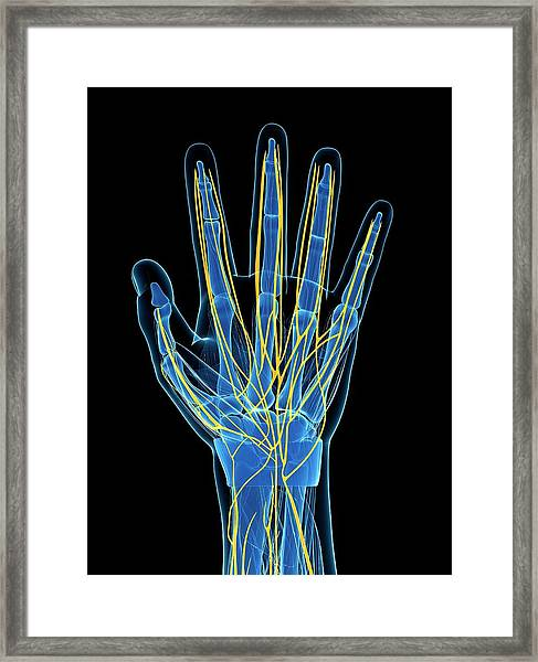 Human Hand Nerves Framed Print by Sebastian Kaulitzki