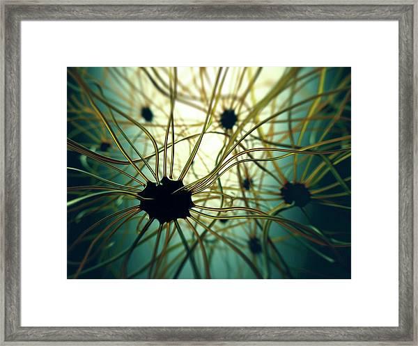 Human Nerve Cells Framed Print by Ktsdesign