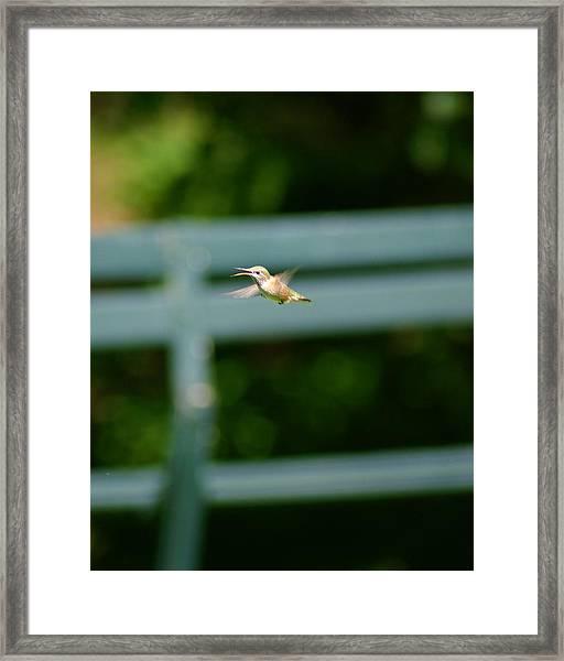 Hummer In Flight Framed Print