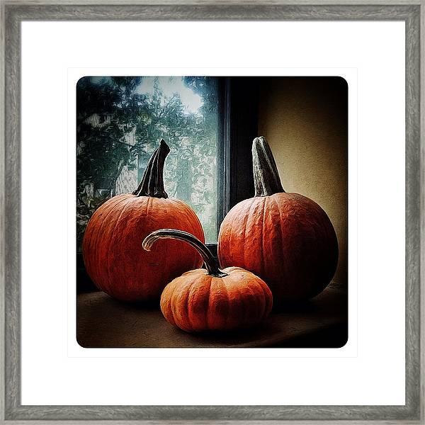 I Love Pumpkins Framed Print