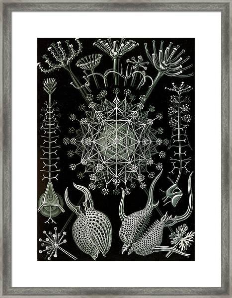 Illustration Shows Microorganisms. Phaeodaria Framed Print by Artokoloro