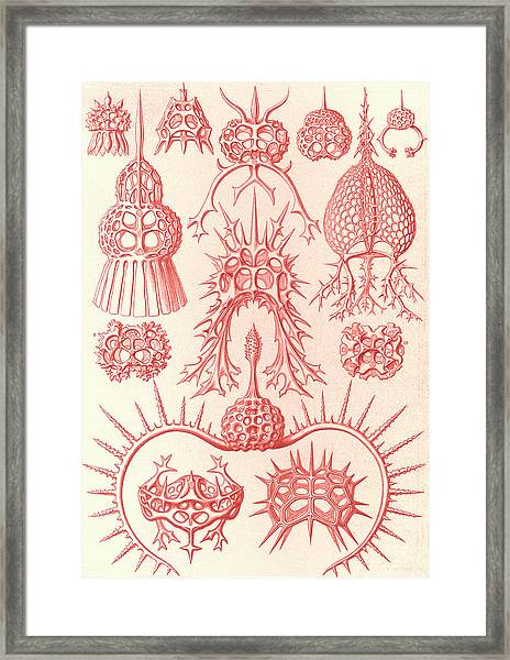 Illustration Shows Microorganisms. Spyroidea Framed Print by Artokoloro