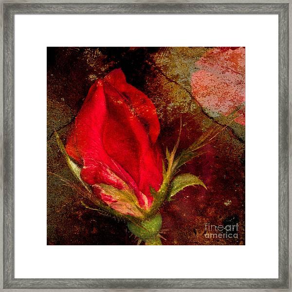 Impressionistic Rose Framed Print