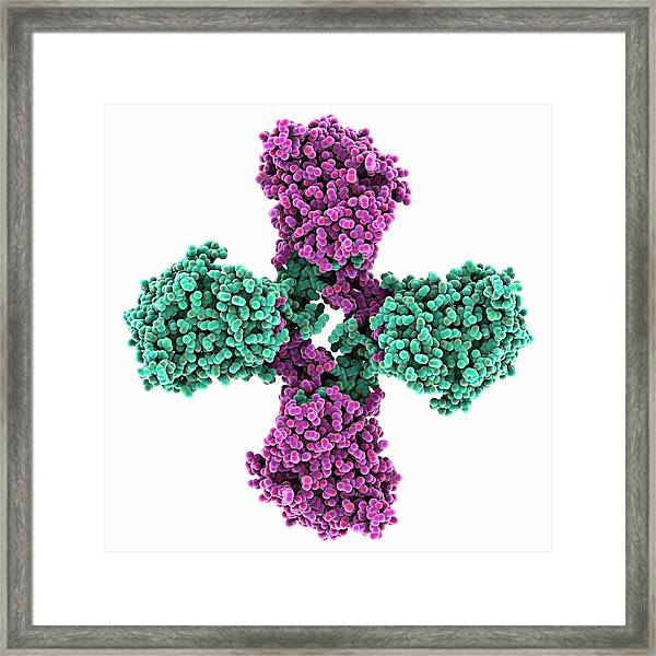 Influenza B Virus Nucleoprotein Framed Print by Laguna Design/science Photo Library