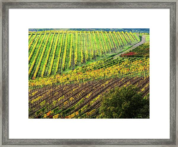 Italy, Montepulciano, Autumn Vineyard Framed Print by Terry Eggers