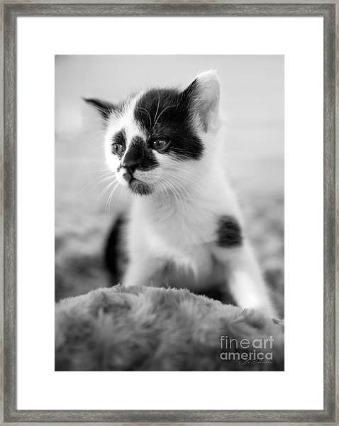Kitten Dreaming Framed Print