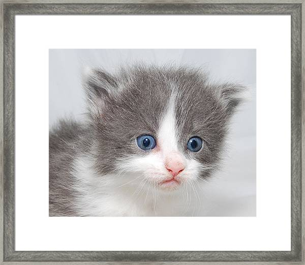 Kitten Framed Print