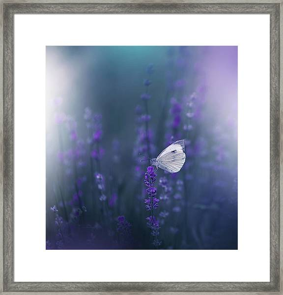 Lavender Queen... Framed Print by Juliana Nan