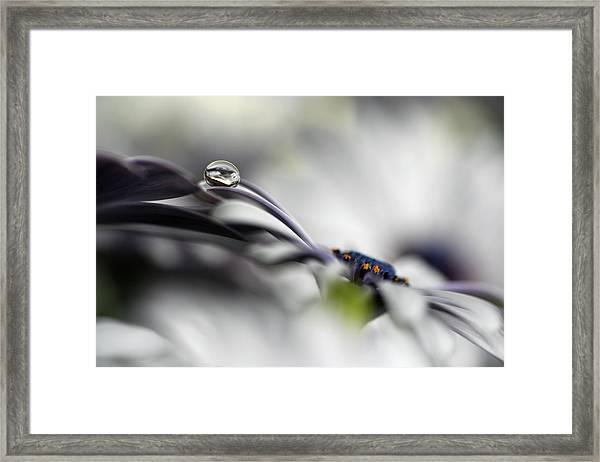Lazy Drop Framed Print by Heidi Westum
