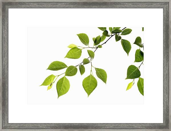 Leaf Series Framed Print by Temmuzcan