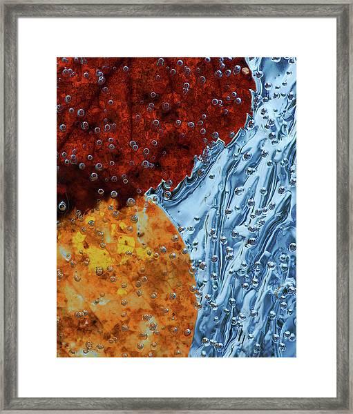 Leaves Frozen In Ice Framed Print