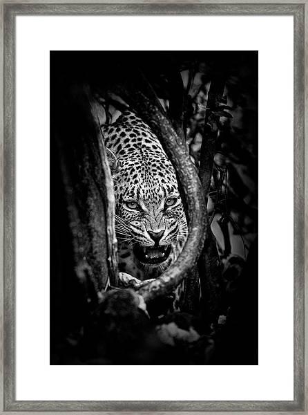 'leopard's Lair' Framed Print