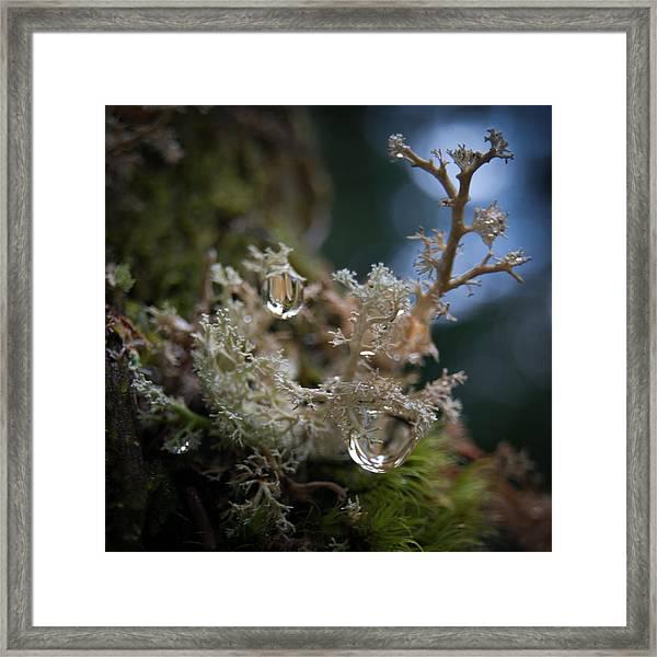 Lichen World Pour  Framed Print