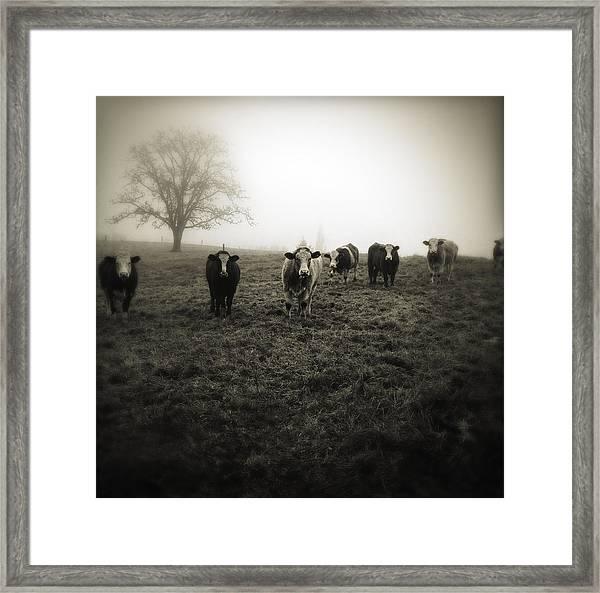 Livestock Framed Print