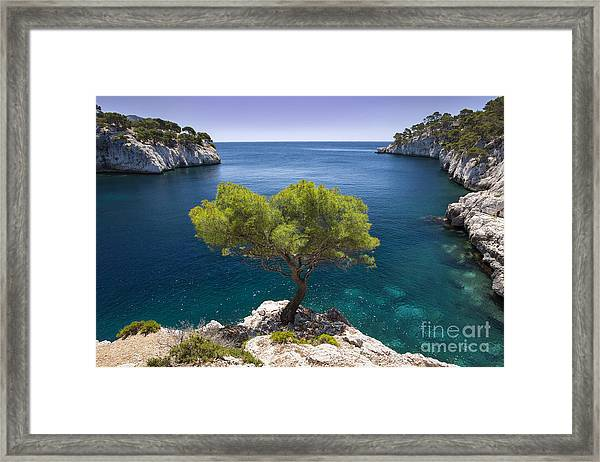 Framed Print featuring the photograph Lone Pine Tree by Brian Jannsen