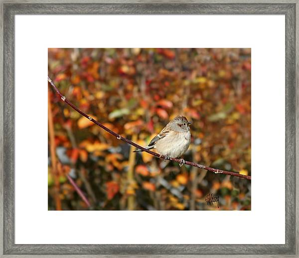 Lone Sparrow Framed Print