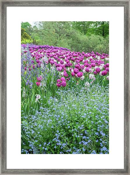 Longwood Gardens, Spring Flowers Framed Print