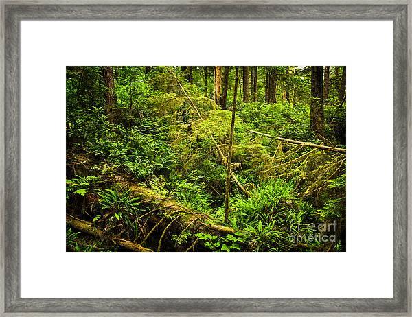Lush Temperate Rainforest Framed Print