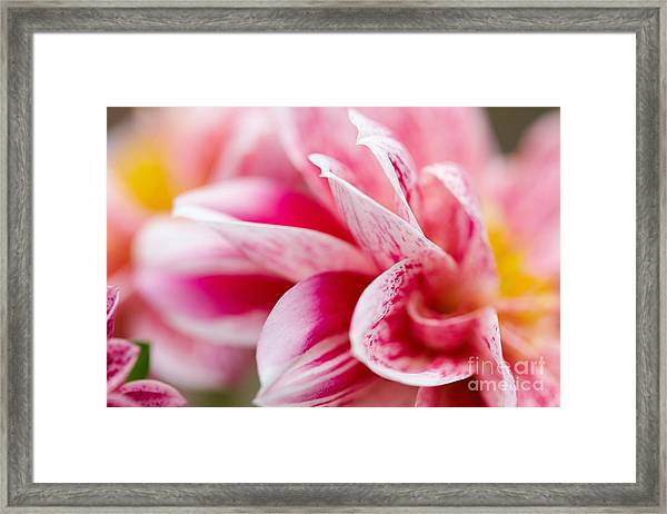 Macro Image Of A Pink Flower Framed Print