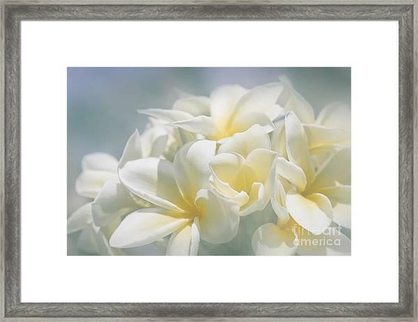 Manakai Framed Print